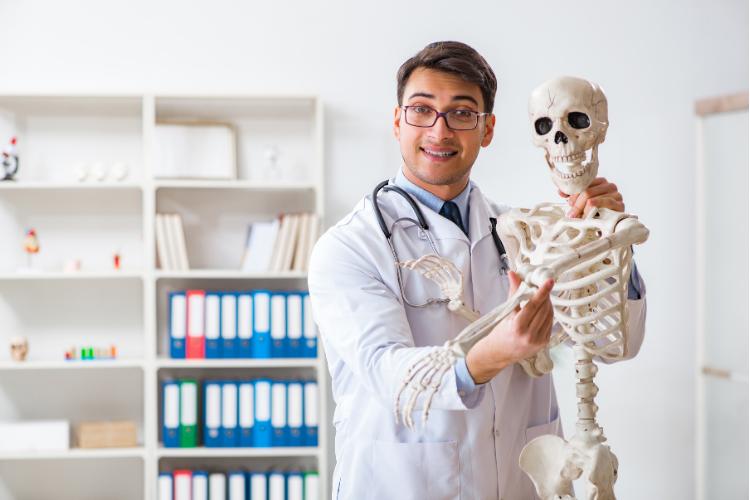 Comment se forment les squelettes - 1