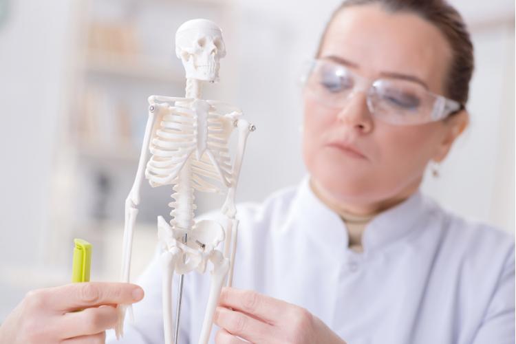 Comment se forment les squelettes - 2