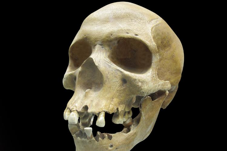 Des crânes allongés ont été retrouvés dans un tombeau chinois - 1