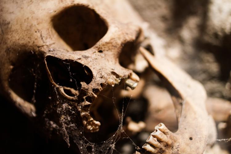 Des crânes allongés ont été retrouvés dans un tombeau chinois - 2