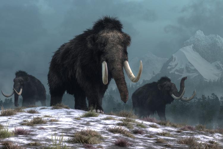 Le mystère des cercles faits de crânes de mammouth - 1