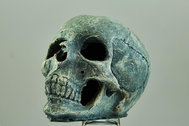 Les sept crânes cachés de l'évolution humaine - 2
