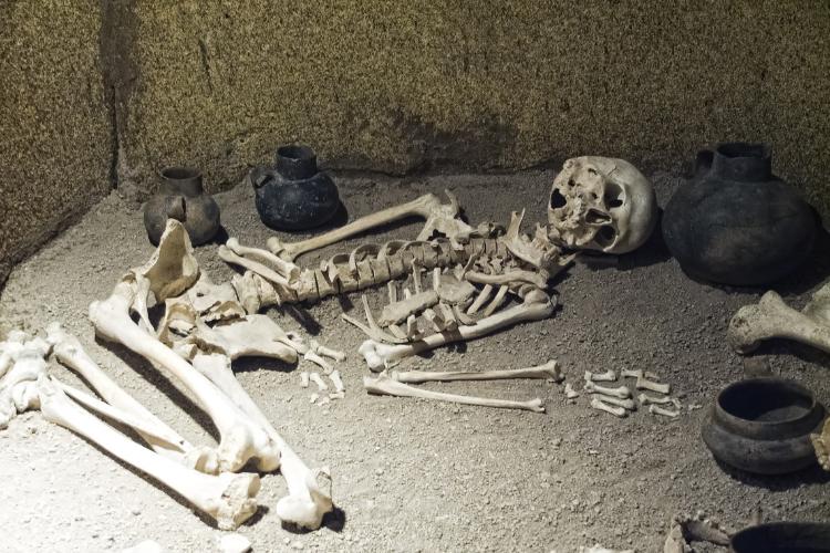 Une tête de mort montre une évolution rapide chez un ancêtre humain primitif - 1